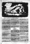 Wellington Journal Saturday 01 April 1854 Page 5