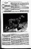 THE FIELD, THE COUNTRY GENTLEMAN'S NEWSPAPER.. THE IRISH WOLFHOUND.